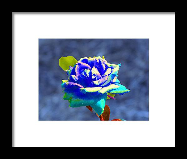 Electric Blue Rose Framed Print featuring the photograph Electric Rose by Randie Lee