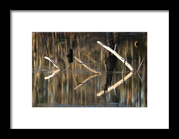 Abstract Framed Print featuring the photograph Fallen Trees by Lori Mellen-Pagliaro