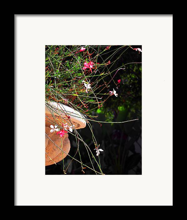 Filigree Framed Print featuring the photograph Filigree-iii by Susanne Van Hulst