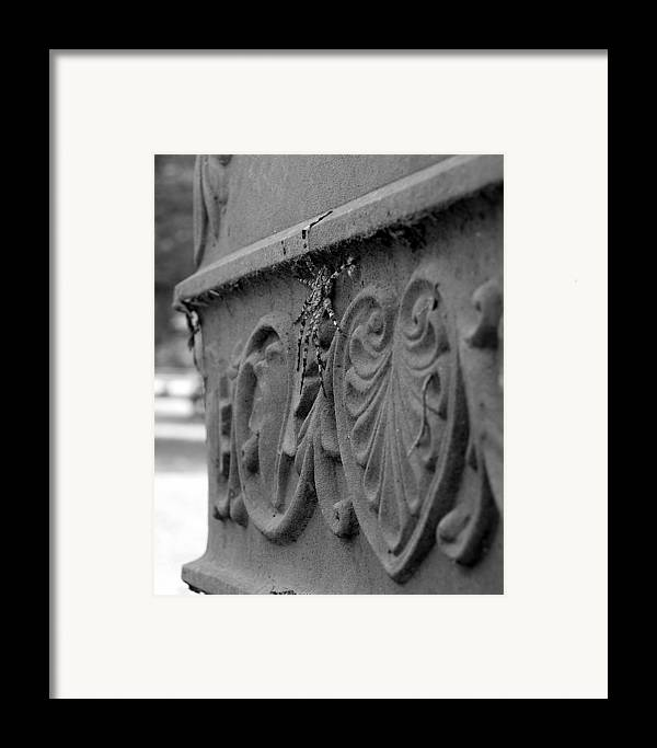 Photograph Framed Print featuring the photograph Grave Crawler by Lindsey Orlando