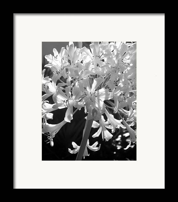 Lily Of The Nile Framed Print featuring the photograph Lily Of The Nile by Lindsey Orlando