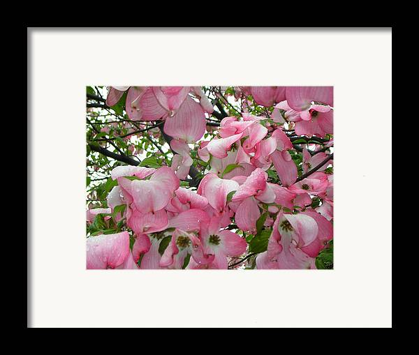 Flowers Framed Print featuring the photograph Magnolias by Heather Weikel