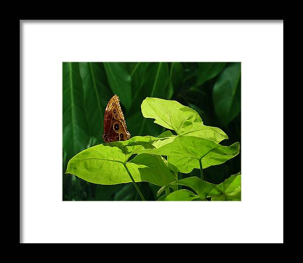 Light Framed Print featuring the photograph Morning Light by Gae Helton