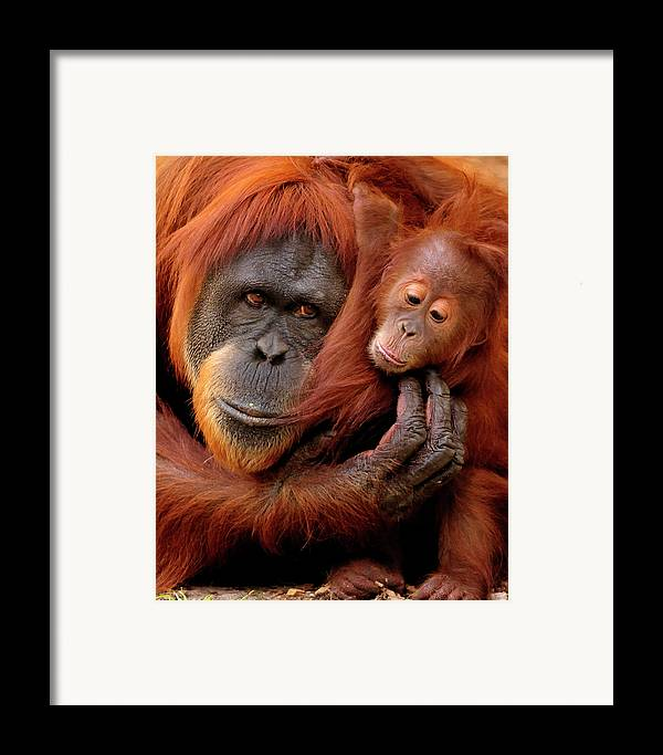 Vertical Framed Print featuring the photograph Mother And Baby by Andrew Rutherford - www.flickr.com/photos/arutherford1