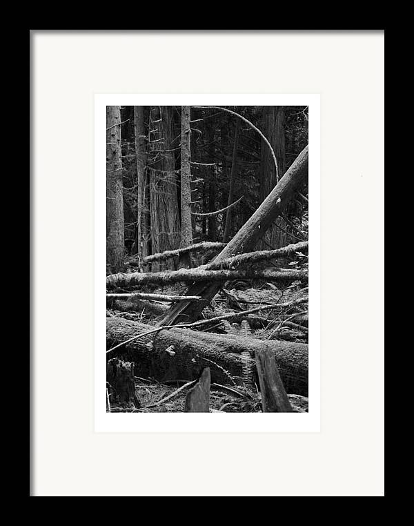 Black Framed Print featuring the photograph Natural Forest by J D Banks