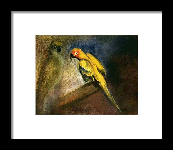 Parrots Framed Print featuring the drawing Parrots by Mushtaq Bhat