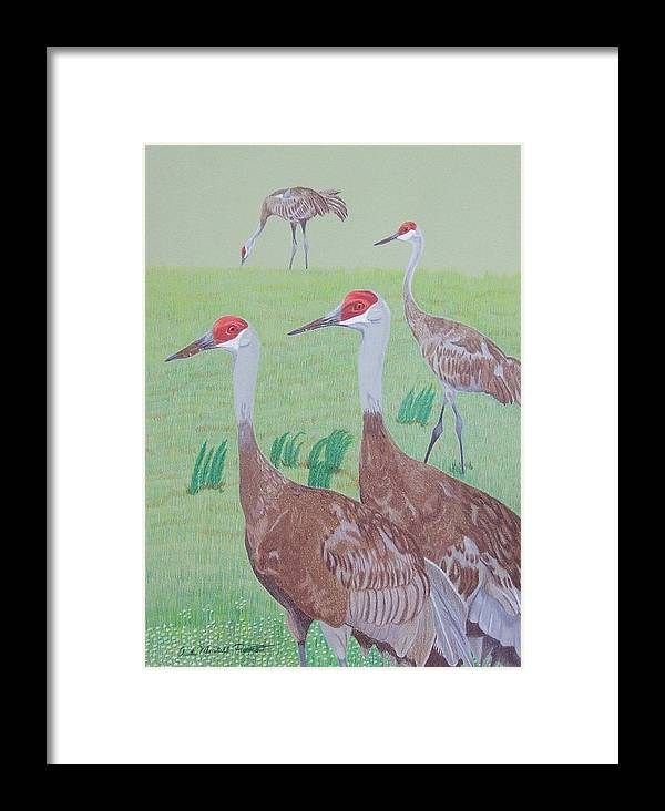 Crane Framed Print featuring the painting Red Heads by Anita Putman