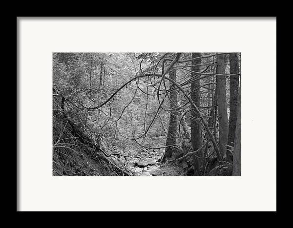 Black Framed Print featuring the photograph Seeking New Light by J D Banks