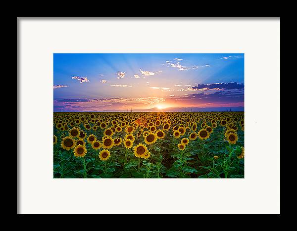 Horizontal Framed Print featuring the photograph Sunflower by Hansrico Photography