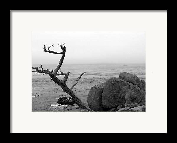 Tree Framed Print featuring the photograph Tree And Boulder by Kenna Westerman