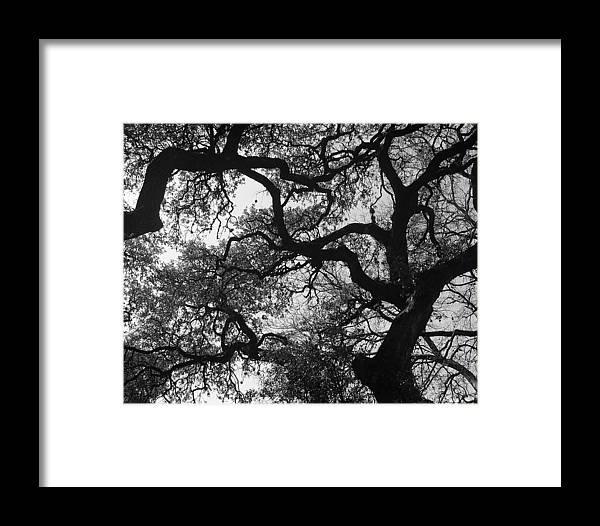 Tree Branches Framed Print featuring the photograph Tree Gazing by Lindsey Orlando