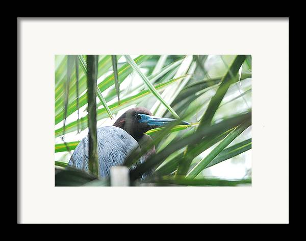 Wings Framed Print featuring the photograph Under Her Watchful Eye by Margaret Fortunato