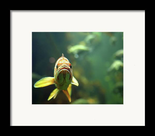 Horizontal Framed Print featuring the photograph Why The Sad Face by by Jun Aviles