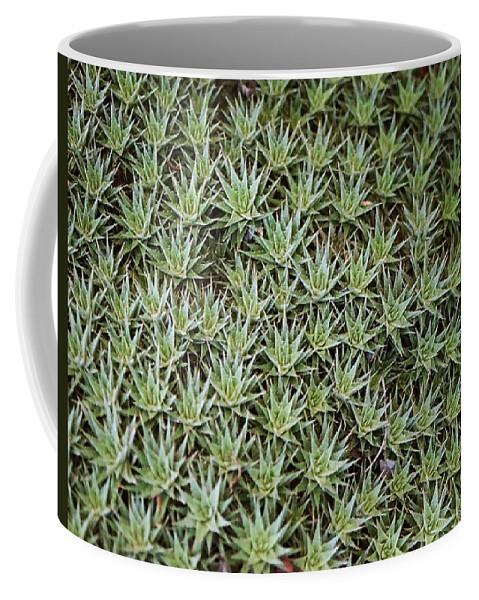 Cactus Coffee Mug featuring the photograph Feild Of Stars by Dean Triolo