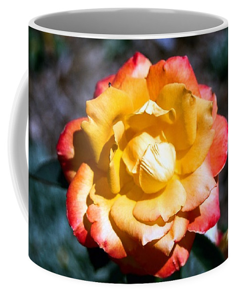 Rose Coffee Mug featuring the photograph Red Tipped Yellow Rose by Dean Triolo