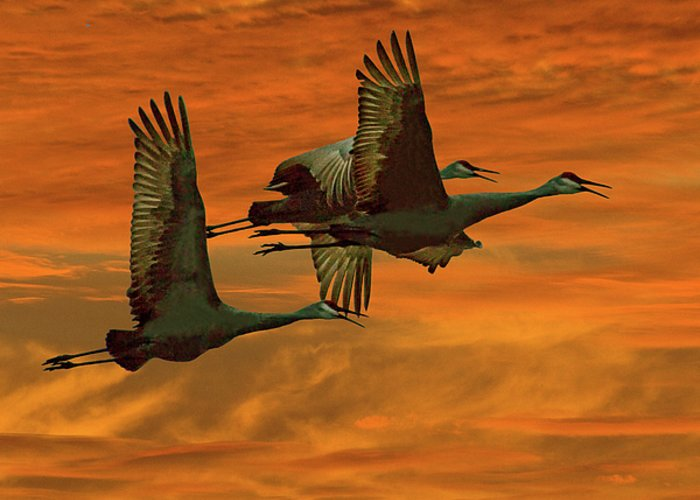 Sandhill Cranes Greeting Card featuring the photograph Cranes At Sunrise by Larry Linton