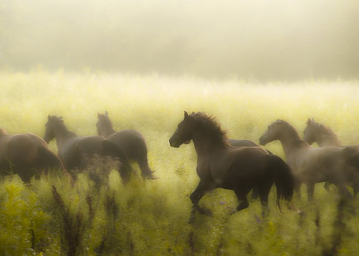 Equine Greeting Card featuring the photograph Freedom by Ron McGinnis