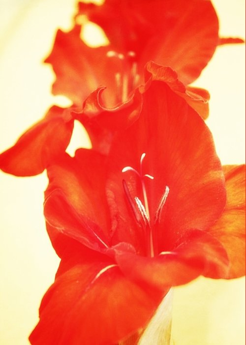 Greeting Card featuring the photograph Gladiola by Cathie Tyler