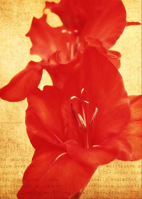 Gladiolas Greeting Card featuring the photograph Gladiola by Cathie Tyler