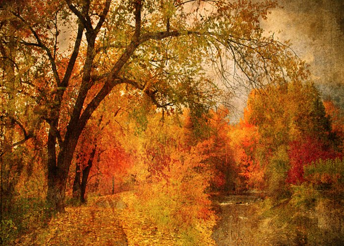 Pathway Greeting Card featuring the photograph Autumn Pathways by Tara Turner