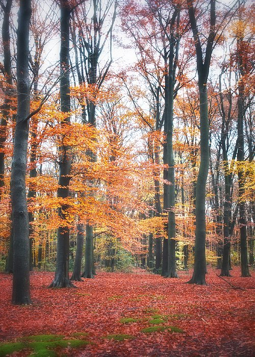 All Greeting Card featuring the photograph Autumn Whispers I by Artecco Fine Art Photography