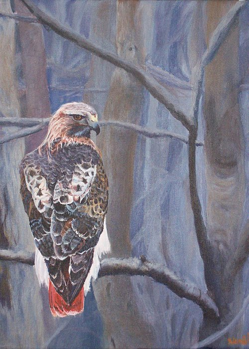 Red-tailed Hawk Paintings Greeting Card featuring the painting Can't See The Forest For The Trees by Bill Werle