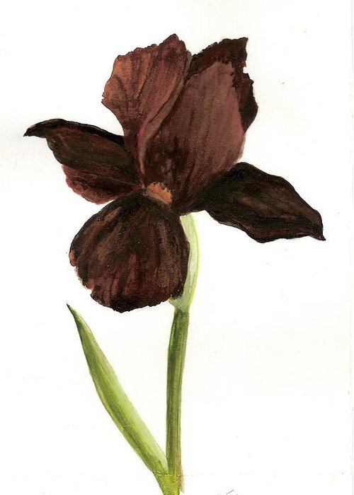 Greeting Card featuring the painting elderly Iris by Susan Tilley