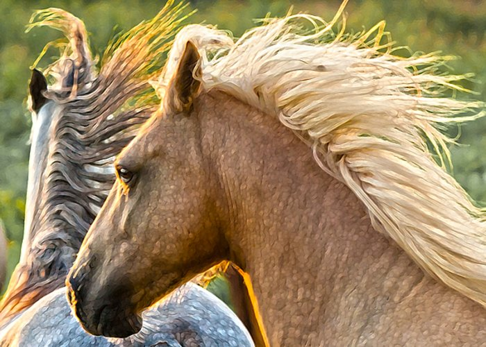 Horse Greeting Card featuring the photograph Free Spirits by Ron McGinnis