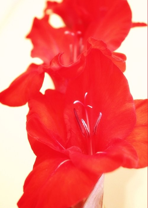 Greeting Card featuring the photograph Gladiola Stem by Cathie Tyler