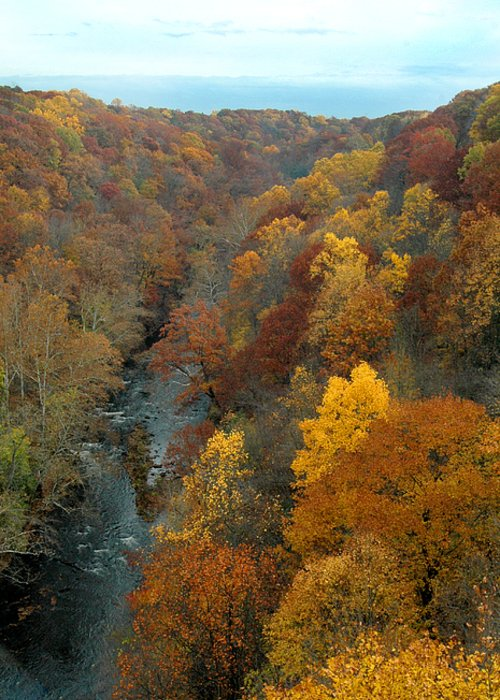 Fall Foliage Greeting Card featuring the photograph Highbridge Highs by Trish Hale