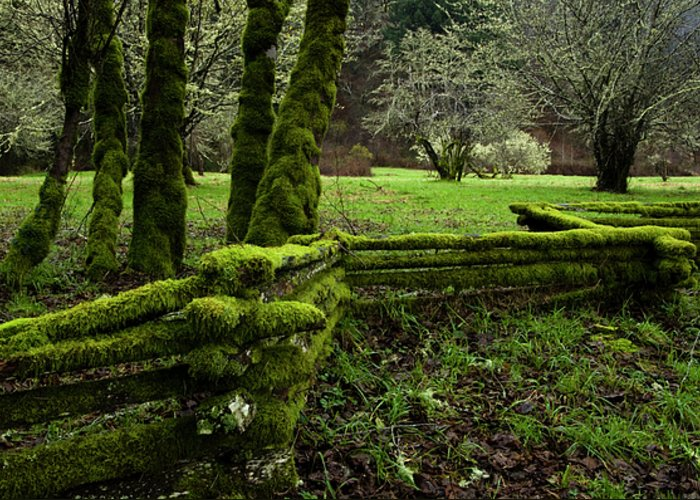 Moss Greeting Card featuring the photograph Mossy Fence 2 by Bob Christopher