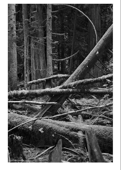 Black Greeting Card featuring the photograph Natural Forest by J D Banks