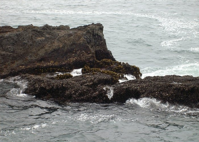 Ocean. Nature Greeting Card featuring the photograph Pacific Ocean In July by Jessica Meredith