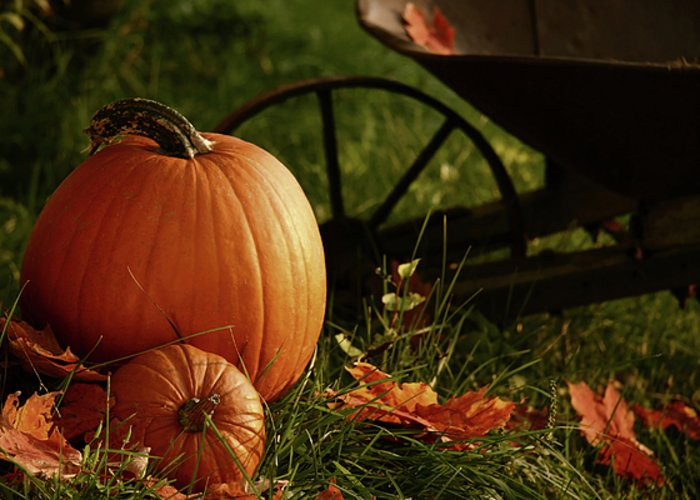 Autumn; Background; Bold; Bountiful; Breathtaking; Brilliant; Color; Colorful; Crisp; Fall; Favorites; Foliage; Gold; Golden; Gourds; Halloween; Harvest; Leaves; Nature; November; October; Orange; Outdoor; Outside; Pumpkin; Red; Scene; Scenic; Season; Seasonal; September; Spectacular; Still-life; Thankful; Thanksgiving; Vibrant; Greeting Card featuring the photograph Pumpkins In The Grass by Sandra Cunningham