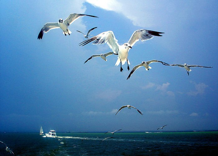 Seagulls Greeting Card featuring the photograph Seagulls by Brittany H