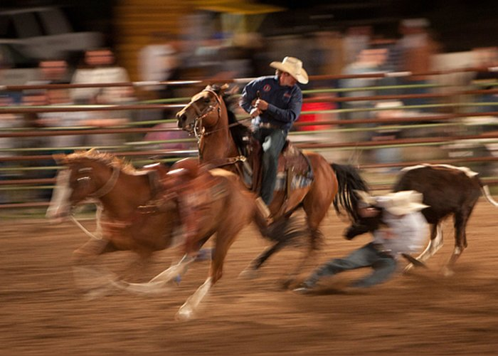 Rodeo Greeting Card featuring the photograph Steer Wrestling Action by Janice M LeCocq