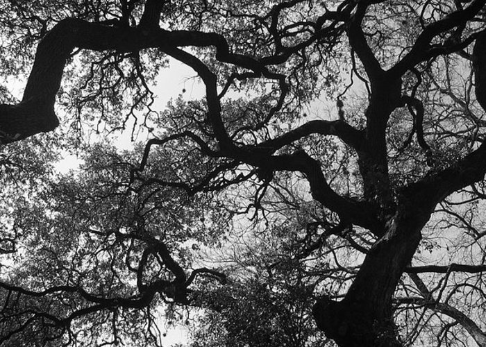 Tree Branches Greeting Card featuring the photograph Tree Gazing by Lindsey Orlando