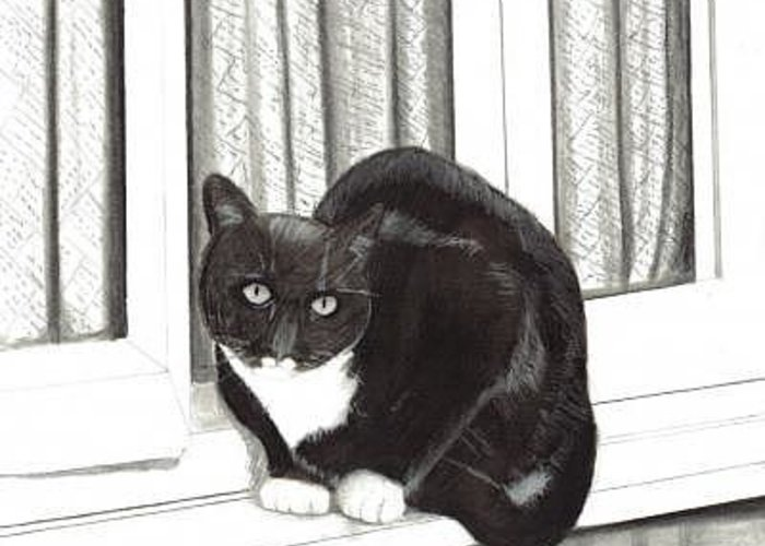 Cat Greeting Card featuring the digital art Tuxedo Cat Sitting In Window by Joshua Hullender