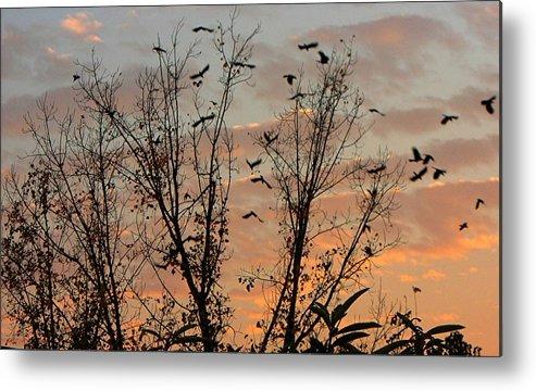 Birds Metal Print featuring the photograph Black Birds At Sundown by Caroline Urbania Naeem