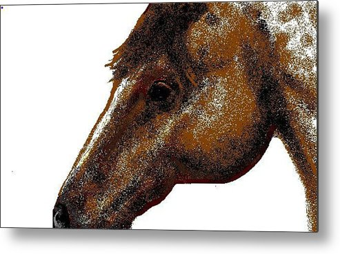 Horse Metal Print featuring the digital art Appaloosa Eye by Carole Boyd