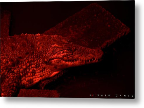 Alligator Metal Print featuring the photograph Said Dante by Jonathan Ellis Keys
