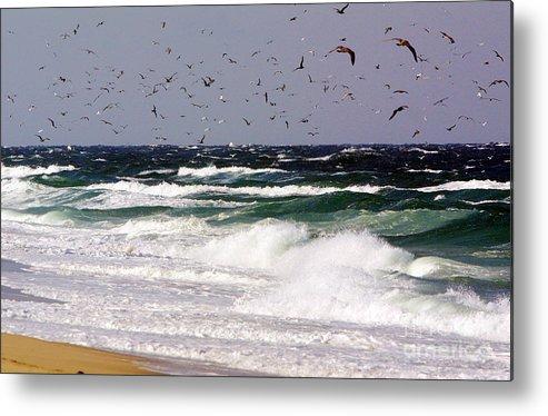 Race Point Beach Metal Print featuring the photograph Birds Feeding Frenzy by Matt Suess