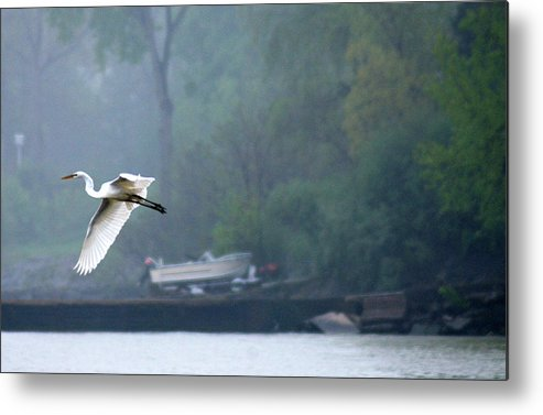 Egret Metal Print featuring the photograph In Flight by Tom Kilbane