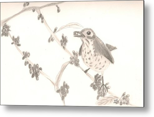 Bird Metal Print featuring the drawing Little Bird by Kristen Hurley