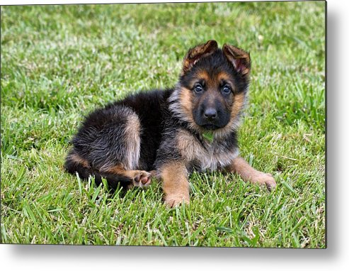 Dogs Metal Print featuring the photograph Puppy In The Spring by Sandy Keeton