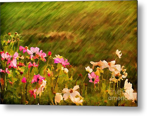 Background Metal Print featuring the photograph Beautiful Cosmos by Darren Fisher