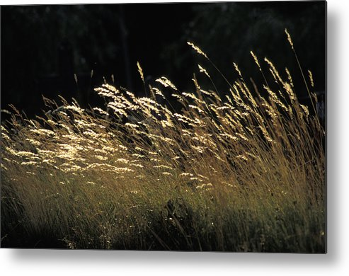 Photographic Metal Print featuring the photograph Blades Of Grass In The Sunlight by Jim Holmes