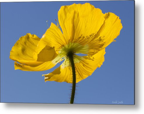 Background Metal Print featuring the photograph Bloom Time by Heidi Smith