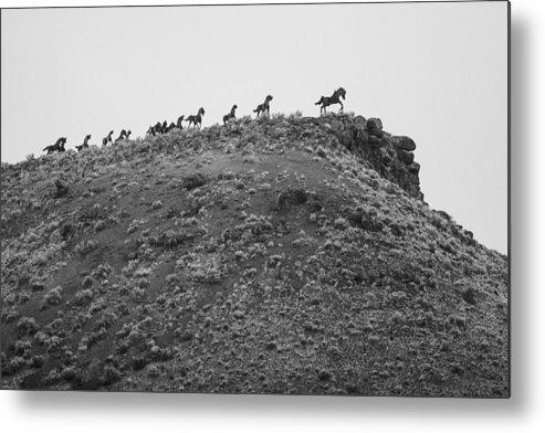Montana Metal Print featuring the photograph Horizon Horse by Paul Bartoszek