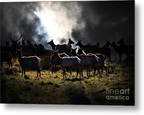 Bayarea Metal Print featuring the photograph Tomales Bay Harem Under The Midnight Moon - 7d21241 by Wingsdomain Art and Photography